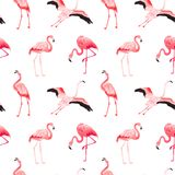 Modello senza cuciture di estate di vettore del fenicottero tropicale Fondo rosa esotico per le carte da parati, pagina Web, stru illustrazione vettoriale