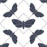 Modello senza cuciture di falco di vettore disegnato a mano del lepidottero Immagini Stock Libere da Diritti