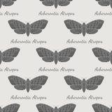 Modello senza cuciture di falco di vettore disegnato a mano del lepidottero Fotografia Stock