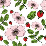 Modello senza cuciture di fioritura della rosa canina con le bacche su bianco Illustrazione del cinorrodonte Fotografia Stock Libera da Diritti