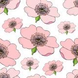 Modello senza cuciture di fioritura rosa della rosa canina su bianco Illustrazione del cinorrodonte Immagini Stock