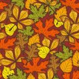 Modello senza cuciture di giorno di ringraziamento con le foglie di autunno degli alberi Stagione luminosa Fotografia Stock