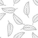 Modello senza cuciture di molte foglie del mango Immagine Stock