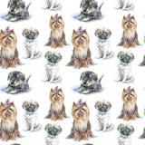 Modello senza cuciture di un cucciolo del carlino, di un Yorkshire terrier e di un cucciolo del bassotto tedesco Fotografia Stock Libera da Diritti