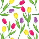 Modello senza cuciture di vettore con i tulipani Immagine Stock