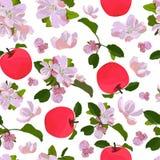 Modello senza cuciture di vettore con il fiore di melo illustrazione di stock