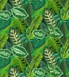 Modello senza cuciture di vettore con le foglie di palma tropicali, piante della giungla illustrazione vettoriale