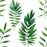 Modello senza cuciture di vettore con le foglie verdi dell'acquerello Fotografia Stock Libera da Diritti