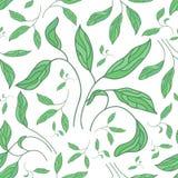 Modello senza cuciture di vettore con le foglie verdi della peonia illustrazione di stock