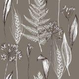 Modello senza cuciture di vettore del modello delle piante di autunno Illustrazione disegnata a mano di vettore illustrazione di stock