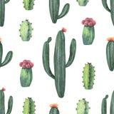 Modello senza cuciture di vettore dell'acquerello dei cactus e della crassulacee isolati su fondo bianco Fotografia Stock Libera da Diritti
