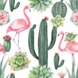 Modello senza cuciture di vettore dell'acquerello del fenicottero, dei cactus rosa e della crassulacee isolati su fondo bianco Fotografie Stock Libere da Diritti