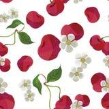 Modello senza cuciture di vettore della ciliegia sul campo bianco royalty illustrazione gratis