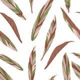 Modello senza cuciture di vettore delle foglie di cordilline su fondo bianco royalty illustrazione gratis