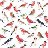 Modello senza cuciture dipinto a mano acquerello con gli uccelli colourful illustrazione di stock