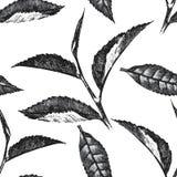Modello senza cuciture disegnato a mano con le foglie del tè Fotografia Stock Libera da Diritti