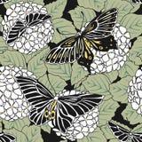 Modello senza cuciture disegnato a mano dei fiori e delle farfalle di hortensia Fotografie Stock Libere da Diritti