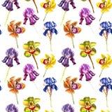 Modello senza cuciture disegnato a mano dell'acquerello dell'iride variopinta e dell'orchidea del beutifull su fondo bianco Mater fotografia stock