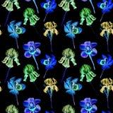 Modello senza cuciture disegnato a mano dell'acquerello dell'iride viola al neon variopinta e delle orchidee su un fondo nero Immagini Stock