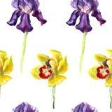 Modello senza cuciture disegnato a mano dell'acquerello dell'iride viola del beutifull e dell'orchidea gialla su fondo bianco Fotografia Stock