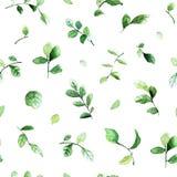 Modello senza cuciture elegante con le foglie verdi dipinte con gli acquerelli su fondo bianco Fotografia Stock