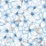 Modello senza cuciture floreale con i fiori bianchi 7 Immagini Stock Libere da Diritti