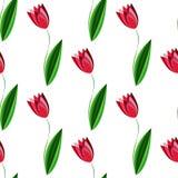 Modello senza cuciture floreale con i tulipani sui precedenti bianchi Fotografia Stock