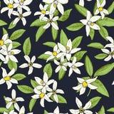 Modello senza cuciture floreale dei fiori disegnati a mano isolati nello schizzo Fotografie Stock Libere da Diritti