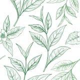 Modello senza cuciture floreale del ramo del tè Fondo delle foglie di tè Fotografia Stock Libera da Diritti