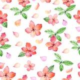 Modello senza cuciture floreale dell'acquerello con i fiori e le foglie delicati della molla Immagini Stock