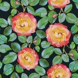 Modello senza cuciture floreale di vettore con le rose dell'acquerello Fotografia Stock Libera da Diritti