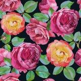 Modello senza cuciture floreale di vettore con le rose dell'acquerello Fotografie Stock Libere da Diritti