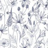 Modello senza cuciture floreale monocromatico disegnato a mano con i fiori selvaggi d'annata splendidi, le erbe e le piante erbac illustrazione di stock