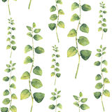 Modello senza cuciture floreale verde dell'acquerello con le erbe con le foglie rotonde illustrazione di stock