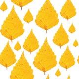 Modello senza cuciture - foglie della betulla gialla Fotografia Stock