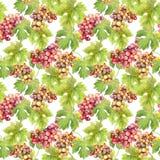 Modello senza cuciture - l'uva, vite, va su fondo bianco watercolor Fotografia Stock Libera da Diritti