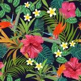 Modello senza cuciture p disegnata a mano isolata variopinta dei fiori tropicali Immagini Stock
