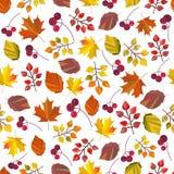 Modello senza cuciture, stampa, struttura, fondo con le foglie di autunno e bacche di vettore Autumn Colors Progettazione di cadu illustrazione di stock