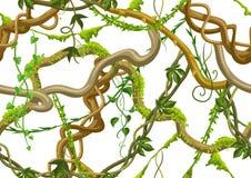 Modello senza cuciture torto delle liane selvatiche royalty illustrazione gratis