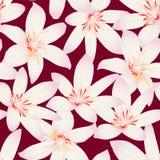 Modello senza cuciture tropicale bianco di progettazione floreale dell'ibisco Immagine Stock