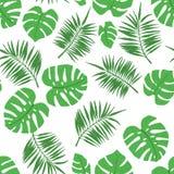 Modello senza cuciture tropicale con le foglie di monstera e della palma illustrazione vettoriale