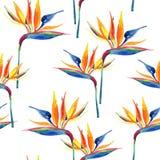 Modello senza cuciture tropicale dell'acquerello semplice con il fiore di uccello-de-paradiso illustrazione vettoriale