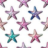 Modello senza cuciture variopinto delle stelle marine esotiche Imitazione dell'acquerello Fotografia Stock