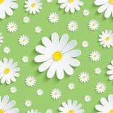 Modello senza cuciture verde della primavera con la camomilla bianca Fotografia Stock Libera da Diritti