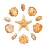 Modello sotto forma di cerchio delle conchiglie e delle stelle marine isolate su un fondo bianco Immagini Stock Libere da Diritti