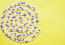 Modello a spirale dei bottoni Fotografie Stock Libere da Diritti