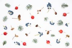 Modello stagionale delle bacche, delle mele di paradiso, delle ghiande e dell'abete rosso Fotografia Stock