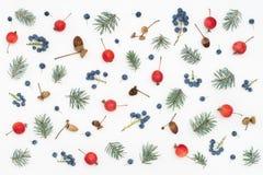 Modello stagionale delle bacche, delle mele di paradiso, delle ghiande e dell'abete rosso Immagini Stock