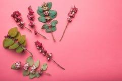 Modello stilizzato delle foglie verdi e delle bacche selvatiche rosse Erba e foglie selvagge della foresta su un fondo rosso immagine stock