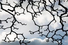 Modello strano dei rami di albero della magnolia Fotografia Stock